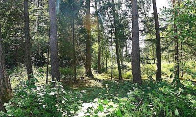 Waldbild Unterbrunner Holz (Foto: M.Pilgram)