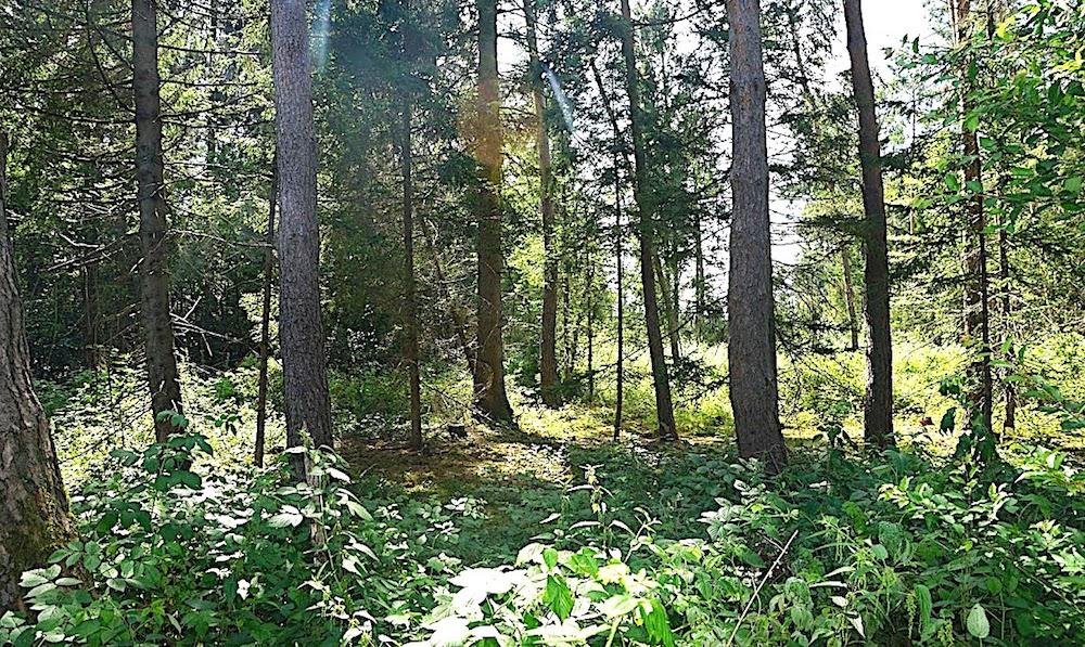 """Leserbrief zum Themenkreis """"geplantes Gautinger Gewerbegebiet im Unterbrunner Holz"""""""